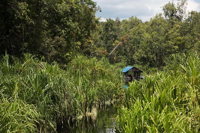 Approaching Tanjung Puting National Park