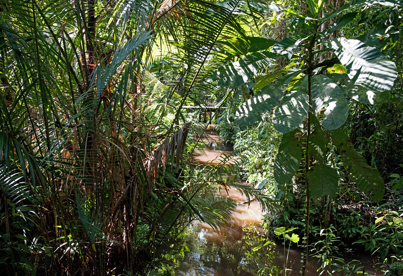 Water and lush vegetation were everywhere on the property.