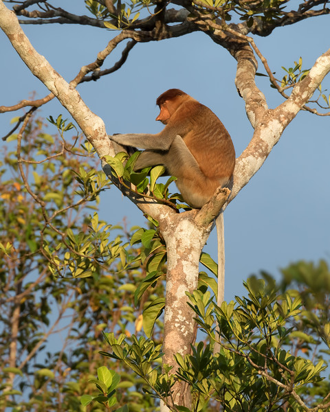 We watched the monkeys for over 30 minutes, but this large female snoozed through the whole thing.