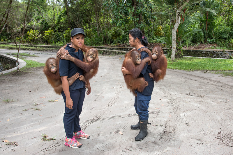 The Care Center is a rescue and rehabilitation facility. There are currently 331 orangutans on site. Dr. Galdikas's goal is to release every single one of them back into the wild.