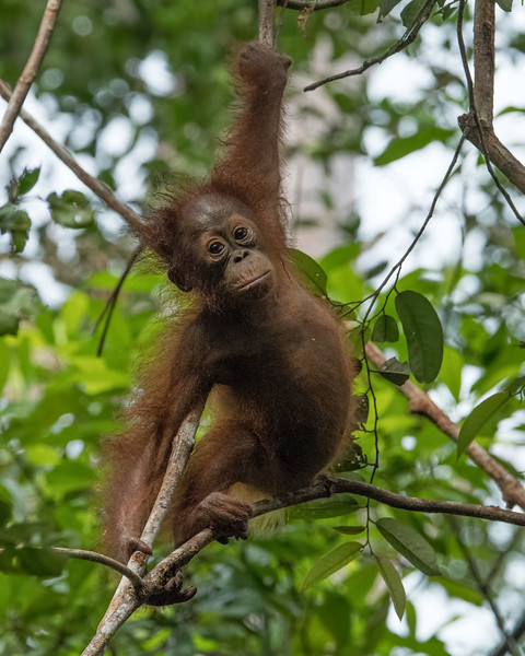 The last adorable baby sighting of the day, then we headed back to Pangkalan Bun for dinner.