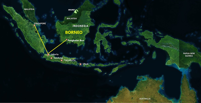 """Where's Borneo?  When I told my friends I was going  there, every single one of them said """"where's that?"""", so here you go.  Amazingly, Borneo is the third-largest island in the world.  It's politically divided among three countries: Malaysia and Brunei in the north, and Indonesia to the south, with the lion's share going to Indonesia.<br /> <br /> In early November, 2016, it was time to depart.  My friend, Linda, and I flew from San Francisco to Singapore (17.5 hrs, but who's counting?).  We spent a day and night in Singapore, then flew on to Jakarta where we met up with the other 11 members of our group plus our tour operators, Irene and Chewy.  We spent one night in Jakarta, then flew to Pangkalan Bun in Borneo.  We had lunch with Dr. Birute Galdikas, our host (more on Dr. Galdikas later).  After lunch, we boarded klotoks (boats) for the trip to Tanjung Puting National Park where we spent 3.5 days.  Following that, six of us, plus Irene, Chewy, and Dr. Galdikas, returned to Pangkalan Bun, which would be our base for the next 3 days."""