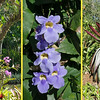 The gardens were filled with an astonishing array of plants and flowers.