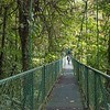 After leaving the quetzals, we headed for a series of hanging bridges.