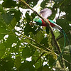 Well, even though the sun was shining, it was still way dark in the forest.  When the quetzal flew off, I just couldn't get a high enough shutter speed to freeze the action.