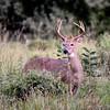 Deer 9-5-15 011
