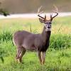 Deer 9-13-15 041