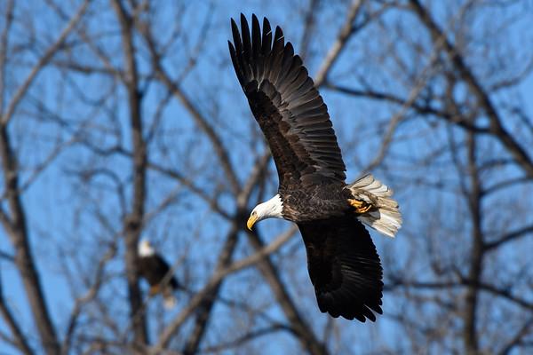 Eagles - DSM River 01-01-16 007