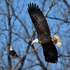 Eagles - DSM River 01-01-16 007