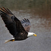 Eagles 02-10-2013 048
