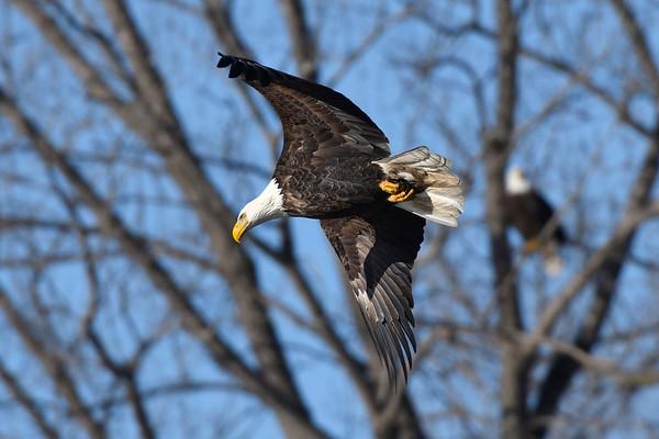 Eagles - DSM River 01-01-16 008