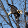 Eagles - DSM River 01-01-16 008