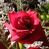 S2Pro2003_0215_121833AA_1