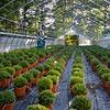 Gilson's Herbs & Flowers 2