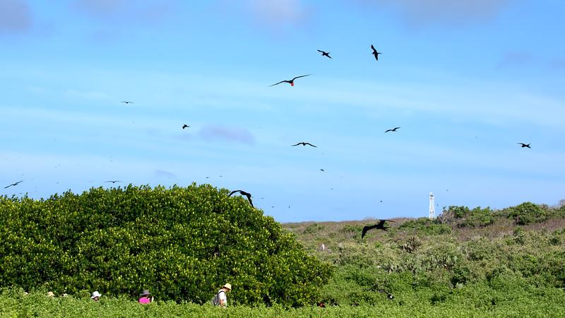Frigatebirds and boobies everywhere.