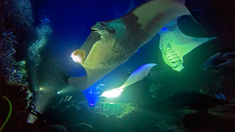 The dive operators set up bright white and blue lights to attract plankton.  As a result, the dive site resembled something out of a science fiction movie.