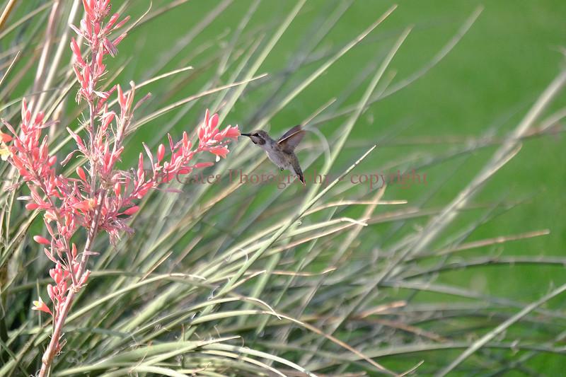 Hummingbirds05292017_3.jpg