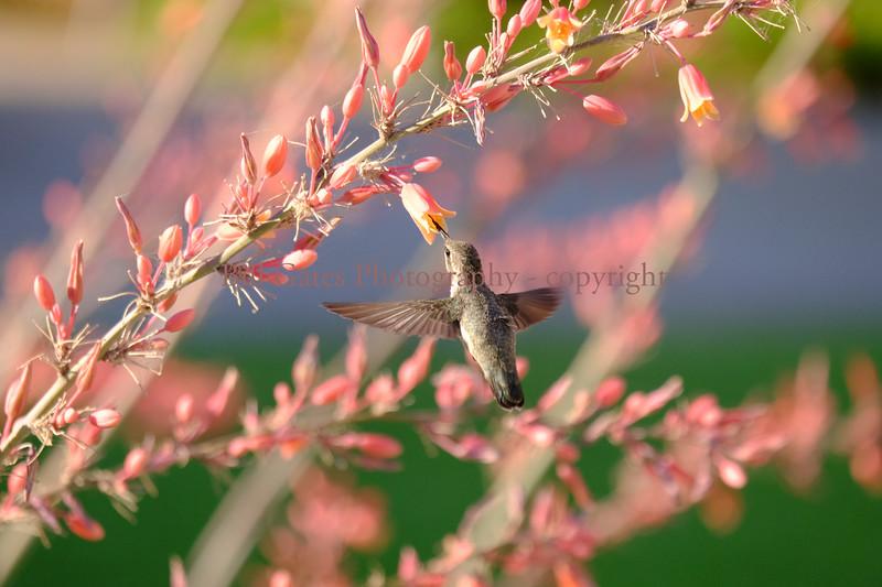 HummingBird_3120.jpg