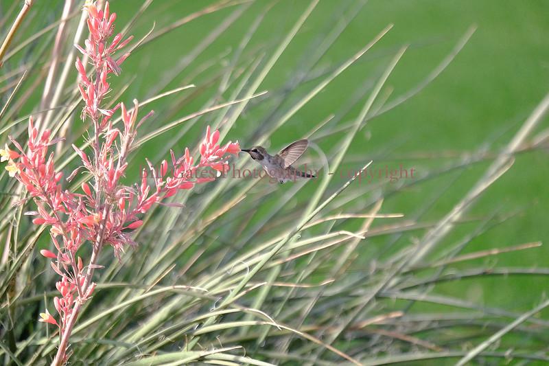 Hummingbirds05292017_2.jpg