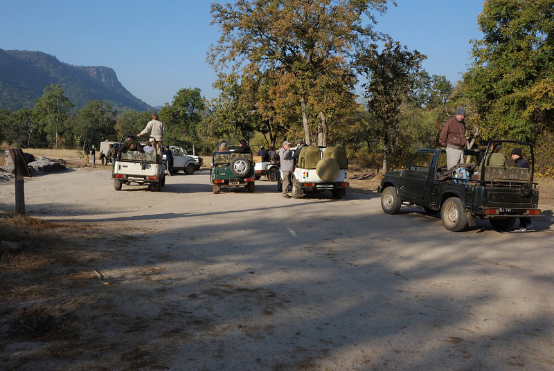 The highest probability of seeing a tiger is from the back of an elephant.  Here's how the system works:  the mahouts (the keepers, trainers, drivers of the elephants) go out early each morning searching for tigers. At the same time, park rangers issue passes to each jeep requesting one.  The jeeps then drive a long distance to a waiting station, pictured here, to get issued a number for tiger viewing.  If a tiger is found, all the jeeps race to the site to wait in line for elephant rides.  If a tiger isn't found, you've wasted hours doing nothing when you could have been driving through the park.