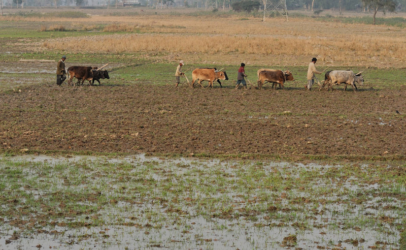 It's a hard, simple life in Assam.  Probably very similar to the way it's always been.