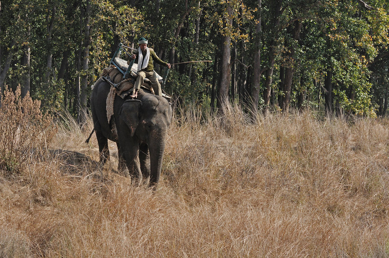 We signed up for just one elephant ride in Kanha.  The whole process is much more relaxed here.... no lines of jeeps, no yelling, no pole vaulting onto the elephant's back (we mounted from stairs on the ground.... better for us as well as for the elephant).