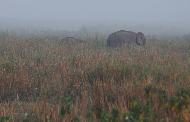 We spent 5 nights in Kaziranga. Each morning before sunrise, we went on an elephant ride into the mist and tall grass. Each afternoon we went on a quiet game drive. Kaziranga is a soothing place, good for the soul.
