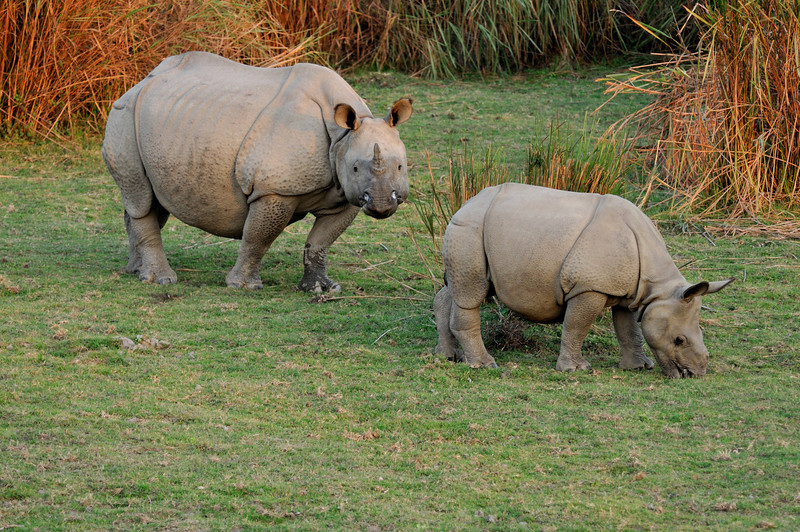A rhino and her baby at sunset.
