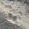 Tiger paw print.