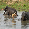 After a long day, the elephants get a bath.