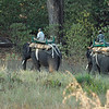 Early each morning the mahouts and their elephants head out in search of tigers. There seems to be great mutual respect and affection between the two. Outside of national parks, mahouts often eat and sleep with their elephants. Female elephants are fairly even-tempered and reasonable, but it takes a mahout to control a big tusker, especially when he comes into musth (sexually active period). At this time, only the mahout can safely be around him.