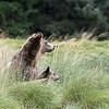 Watching an approaching bear.