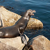 Sea lion hauled out on the jetty.
