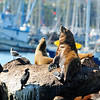 We saw these sea lions sunning themselves just as we made the turn out of the harbor.