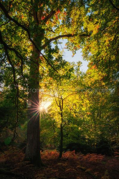 Sun Tree Fern