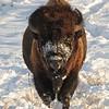 Neal Smith National Wildlife Refuge 2-6-15 105