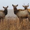Neal Smith National Wildlife Refuge 12-13-14 102