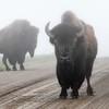 Neal Smith National Wildlife Refuge 5-15-15 064