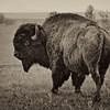 Neal Smith National Wildlife Refuge 5-25 027