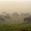 Neal Smith National Wildlife Refuge 8-17 149