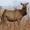 Neal Smith National Wildlife Refuge 12-13-14 105