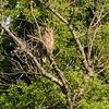 Neal Smith National Wildlife Refuge 5-12-15 116