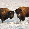 Neal Smith National Wildlife Refuge 2-6-15 111