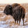 Neal Smith National Wildlife Refuge 01-10-2015 052