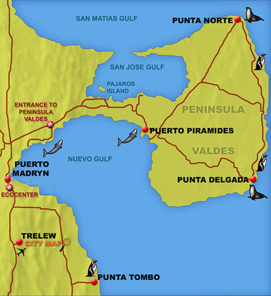 """As you can see on the map, Puerto Piramides is the only town on Peninsula Valdes.  The rest of the land is divided into large cattle, sheep and horse ranches.  The Points (Puntas) mark the approximate range of the orcas during sea lion pupping season.  Punta Norte is home to the largest colony of sea lions on the peninsula.  It also contains an ideal beach from which to hunt, so most orca attacks occur here.  We started early each morning for the 90-minute drive to Punta Norte and returned each evening around 9:00 PM.  Long days.<br /> <br /> The entire peninsula is a very special place.  Here's what the World Heritage Foundation has to say about it:  """"Peninsula Valdés contains very important and significant natural habitats for the conservation of several threatened species of outstanding universal value, specifically its globally important concentration of breeding southern right whales, an endangered species. It is also important because of the breeding populations of southern elephant seals and southern sea lions. The area exhibits an exceptional example of adaptation of hunting techniques by the orca to the local coastal conditions.""""  Peninsula Valdes is also home to very large breeding colonies of magellanic penguins."""