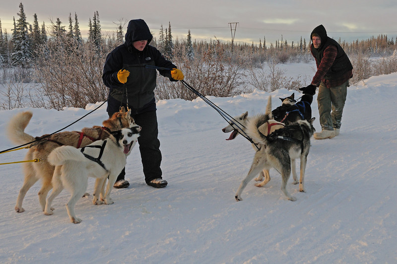 The dogs are very friendly, but so eager to go that they can be hard to manage.