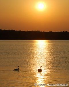 Swan-set
