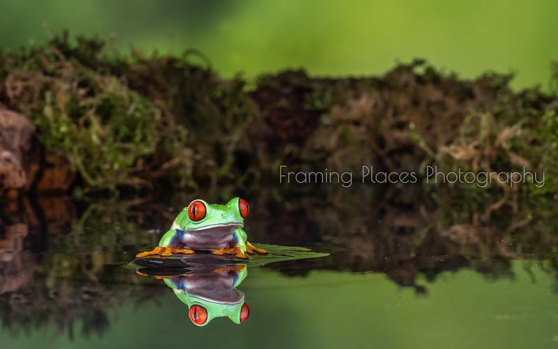 Frog Reflection Pool