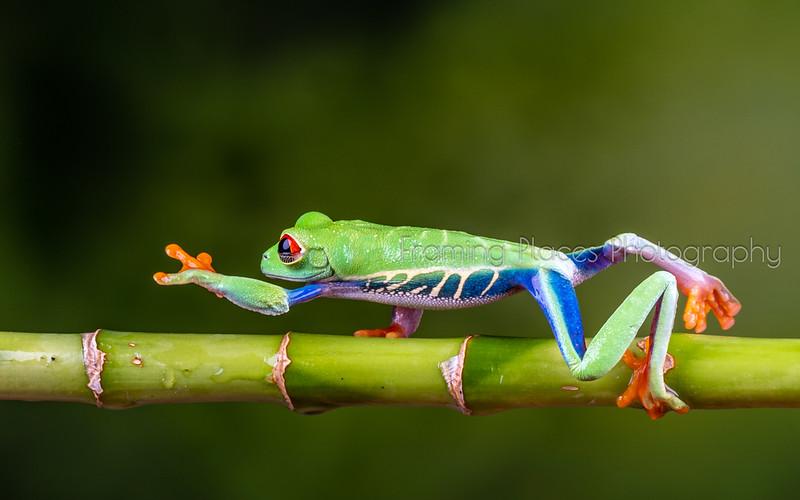 Frog Reach