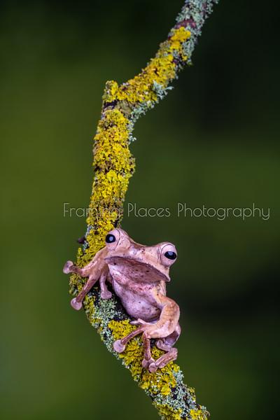 Grumpy Frog Closeup